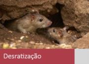 Dedetização em São Paulo - SP