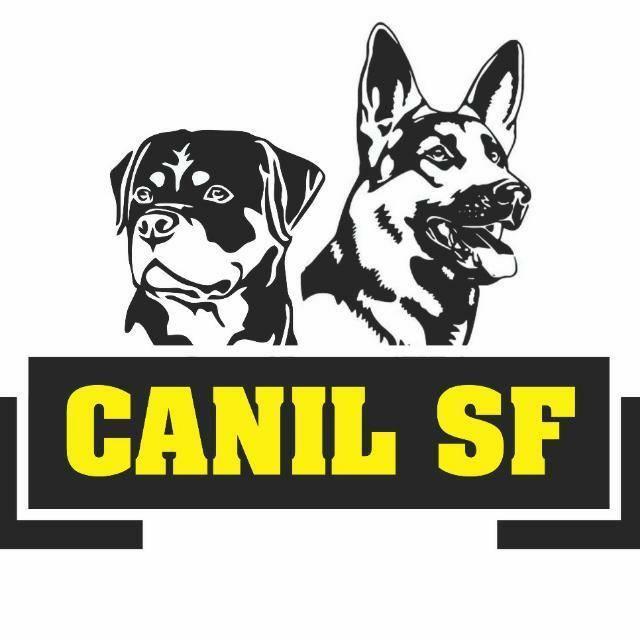Cães de Guarda - Campinas SP